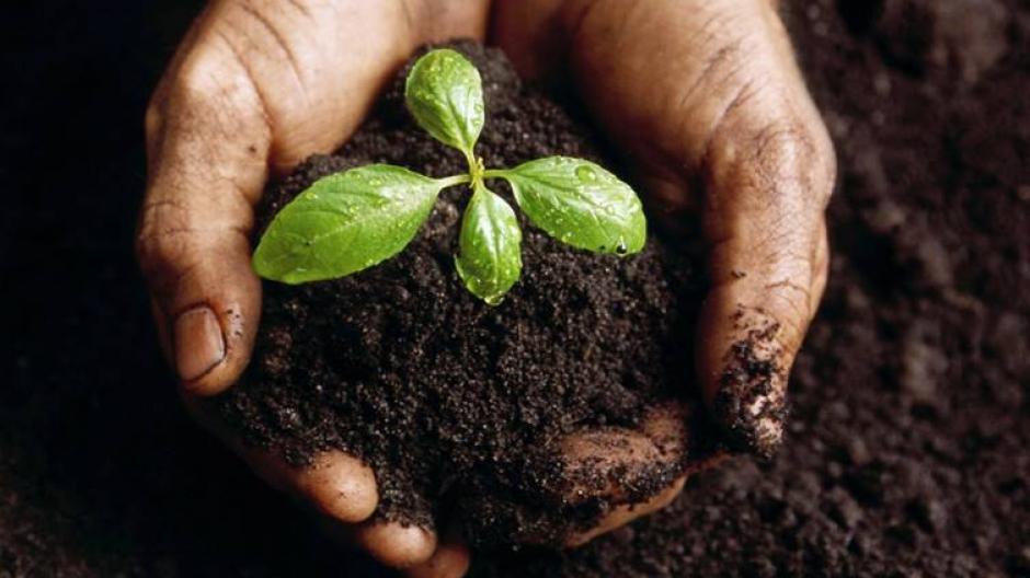 Hands gently cup a dewy seedling.