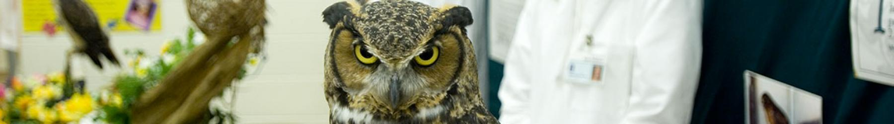 A healthy owl perches in the foreground with a vet in the background.