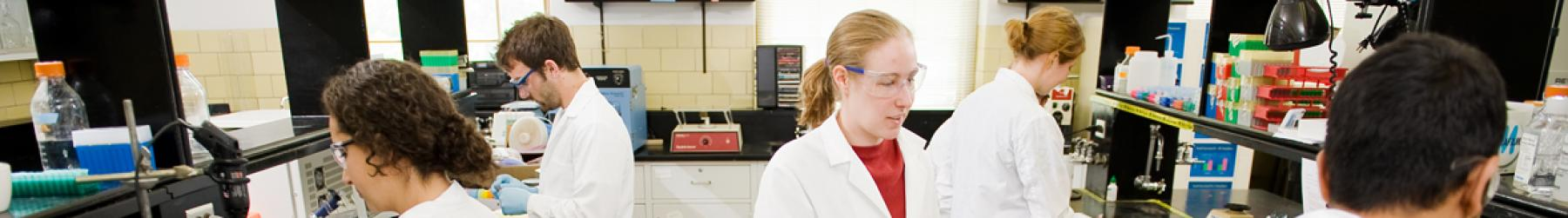 Students in lab coats work industriously at their workstations in a chemistry lab.